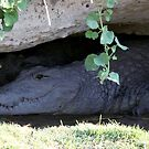 Cave Crocs by Donald  Mavor