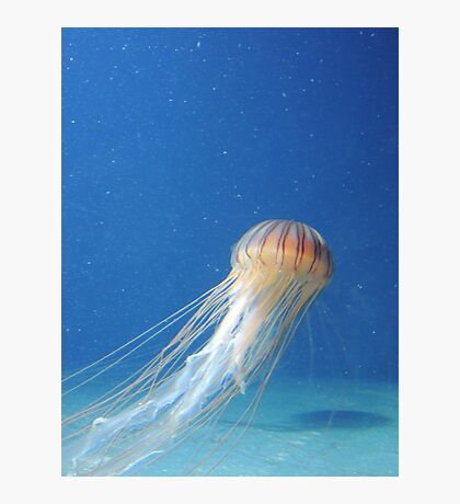 Jellyfish Photographic Print