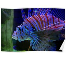 Lion Fish Close-Up Poster