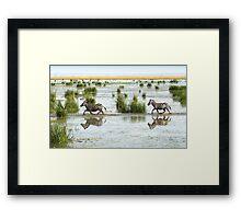 Zebra Cantering Across The Swamp Framed Print