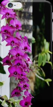Fuchsia Orchids by Lilliana Méndez