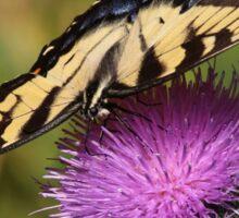 September Swallowtail Sticker