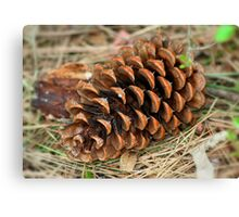 Fir Tree Cone  Canvas Print