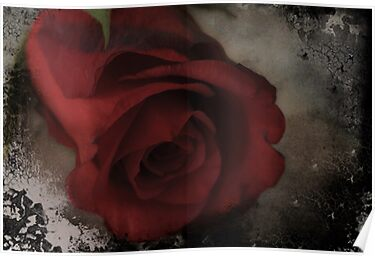 rose on steel by Nicole W.