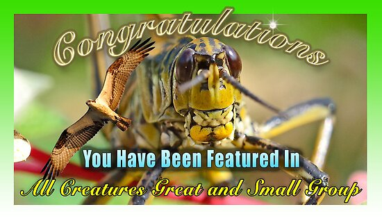 Feature Banner for All Creatures Great and Small by imagetj