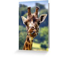 Rothschild Giraffe (Giraffa camelopardalis rothschildi). Greeting Card