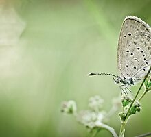 Moth in the bokeh by studioomg