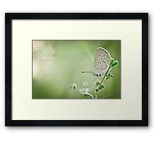 Moth in the bokeh Framed Print