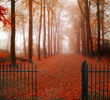 Welcome by PhotoDream Art