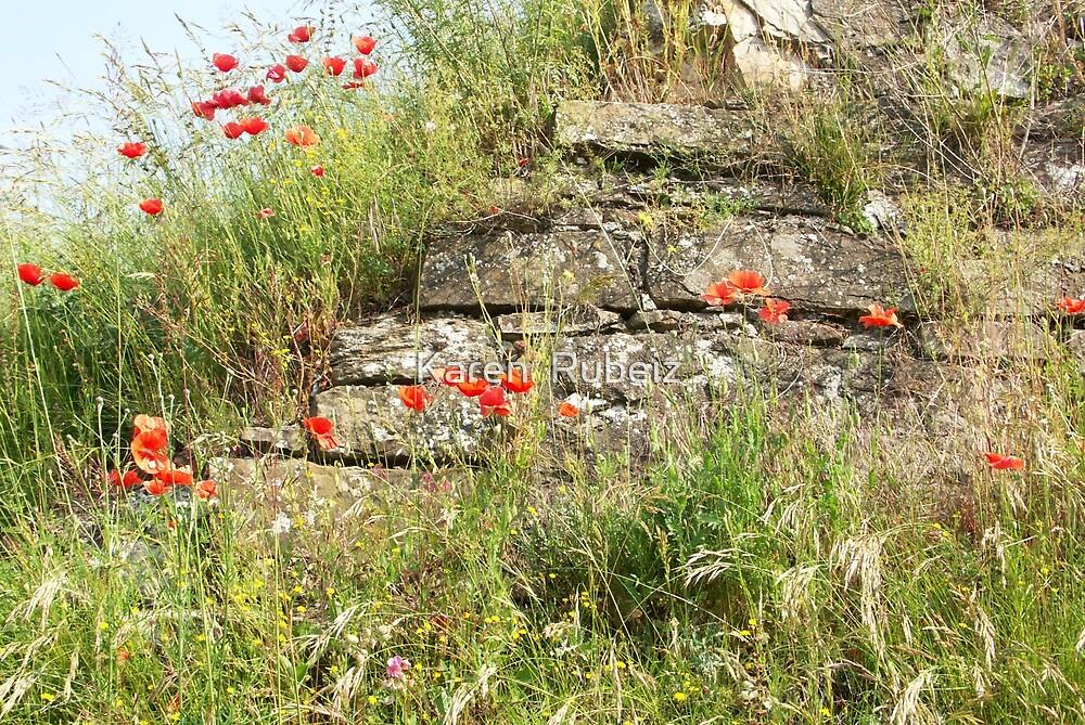Poppies and Limestone by Karen  Rubeiz