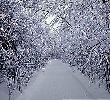 Winter Wonderland by suewen