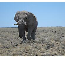 Lonely walk across the plains Photographic Print
