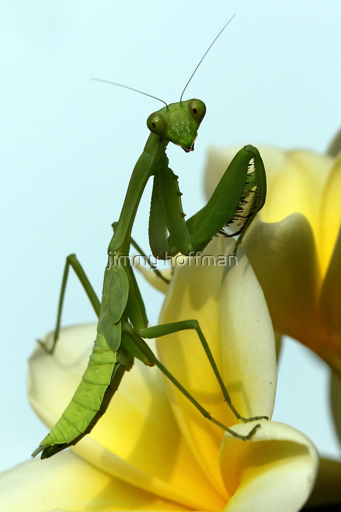 Hi there! by jimmy hoffman