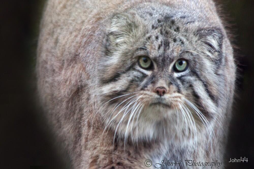 Mini Lions / balls of fur!!! by John44