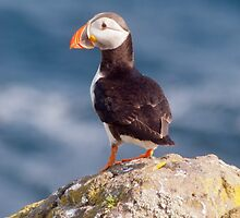 Puffin on cliff ~ Isle of May by M.S. Photography/Art