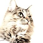Maine Coon iPad Cover by Carol Bleasdale