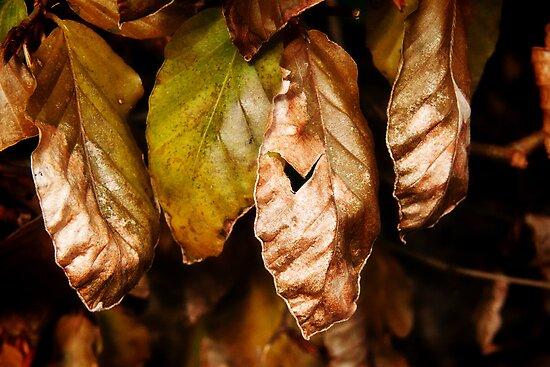 Leaves Of Gold by Susie Peek