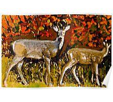 Buck in Autumn Poster