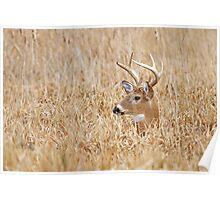 Marsh Buck Poster