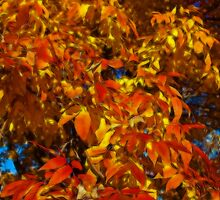 Autumn leaves. by vadim19