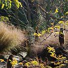 Meerkats on watch by Jon Catt