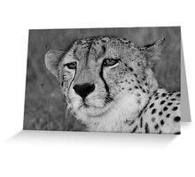 A wild cheetah portrait Greeting Card