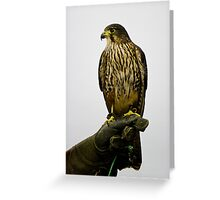 New Zealand Falcon Greeting Card