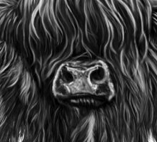 Scottish Highland Cow Sticker
