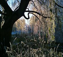 Weeping Warwickshire Willows 2 by John Evans