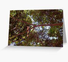 Kookaburra Landscape - 18 11 12 Greeting Card