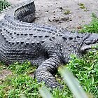 alligator by Brian L. Giddings of Emotions Photography Inc.