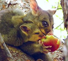 Sharing, Caring Possums by tmac