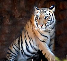 king of jungle by gopalshroti