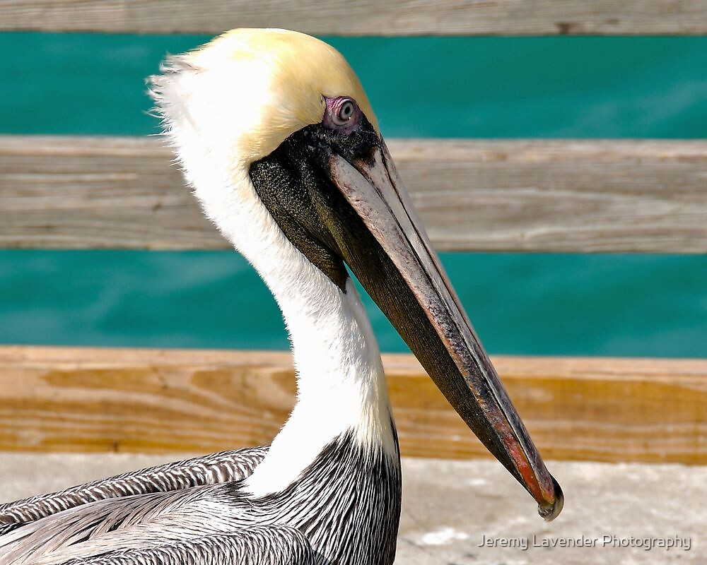Encounter on the Pier in Hollywood, Florida by Jeremy Lavender Photography
