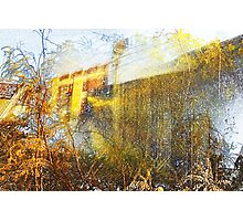 wattle and wall Photographic Print