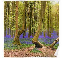 Bluebells Wood 03 Poster