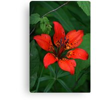 Prairie Wood Lily (Tiger Lily) Canvas Print