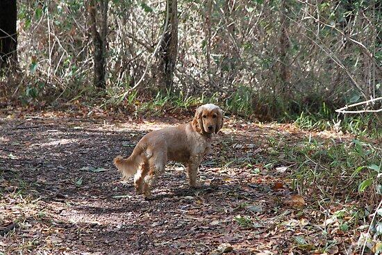 Jessie in the Bush by aussiebushstick