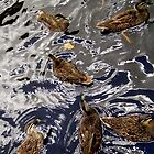 Dabbling Ducks by Michelle Ricketts