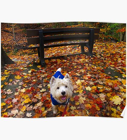 Bench and bark Poster