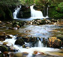 Shearers Hut Creek Falls on the Overland Track , Tasmania , Australia by phillip wise