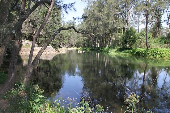 Freshwater! Tallebudgera Creek, Tallebudgera Valley, QLD. by aussiebushstick