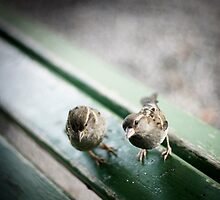 Bench Buddies by A. Duncan