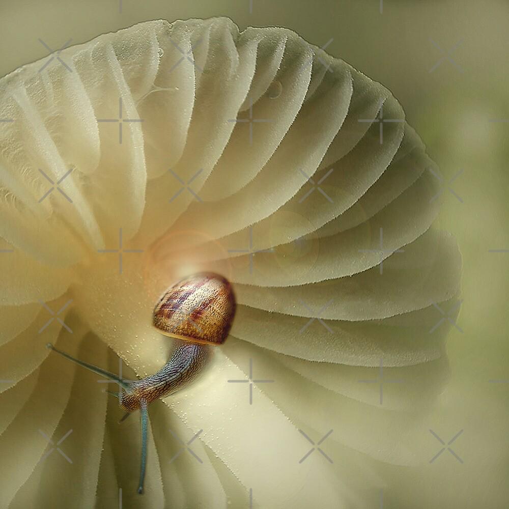 The tiny snail by EbyArts
