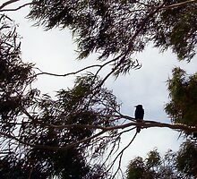 Crow In The Wind - 19 11 12 by Robert Phillips