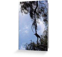 Kookaburra On My Street - Ten - 19 11 12 Greeting Card