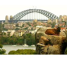 Sydney Tahrs Photographic Print