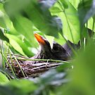 Mother Bird Nesting by Evita