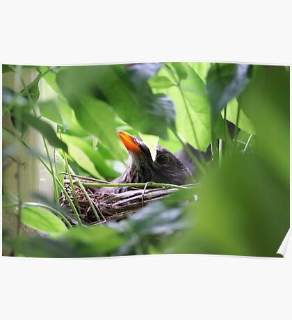 Mother Bird Nesting Poster