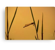 Ginger fly Canvas Print